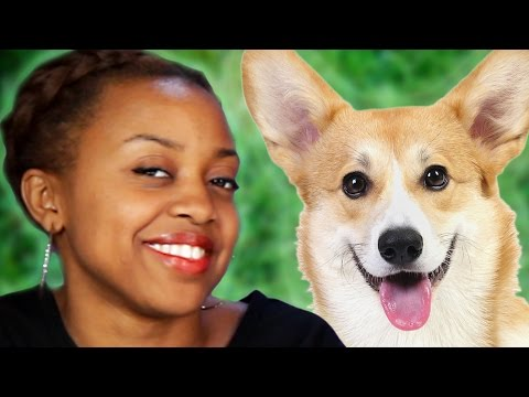 What Dog Breeds Say About Their Owners