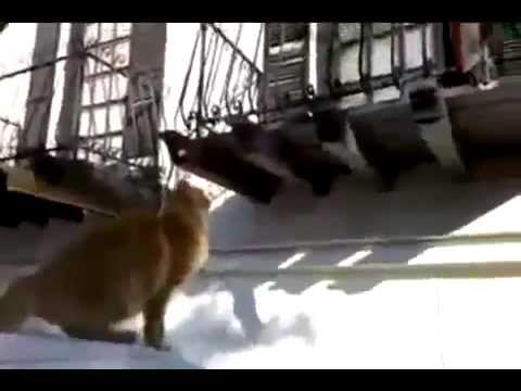 Кошка далеко прыгает flv Юмор! Прикол! Смех