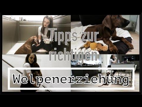 Tipps zur richtigen Welpen-Erziehung | So lernt dein Hund richtig schnell!! | Marina Nerea
