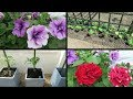 Planting Pumpkins, Squash, Strawberries, Tomato, Sweet Peppers.