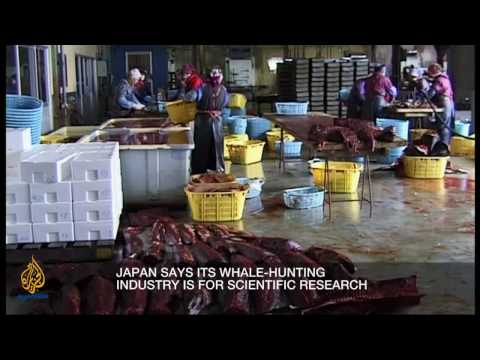 Inside Story - The future of whales