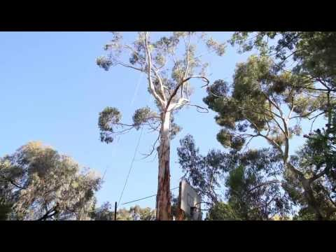 Adelaide Hills Tree & Stump Removal - Timelapse Video