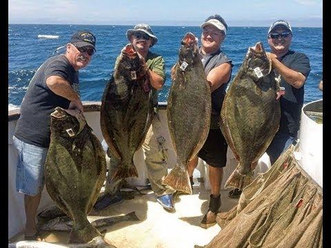 Mirage sportfishing california halibut fishing 55lb and for Cisco s sportfishing fish count