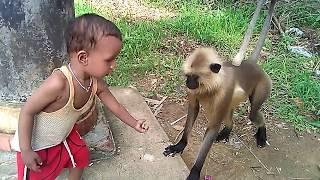 Himmat wale Bachhe Khatarnak Bandaron ke Saath/ Dare to touch and play with monkeys.