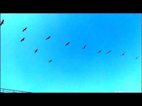 Eto Vellipoyindi Manasu (ninne Pelladutha) By Anil Attuluri   June 29 2012 video