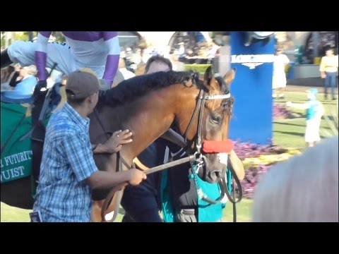 Kentucky Derby 2016 Horse Nyquist and his  Galileo, Frankel family connections