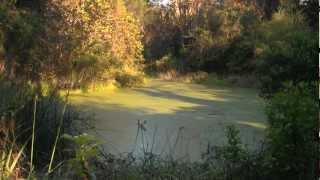 Things to do on Sanibel, FL: Pond Apple Park