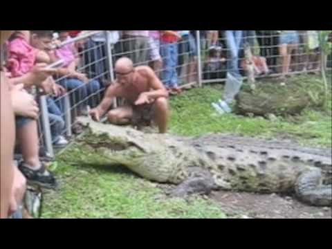 Crocodile Man