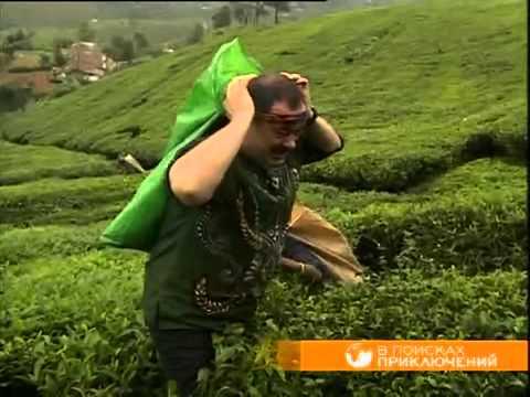 В поисках приключений. Производство чая на Шри-Ланке