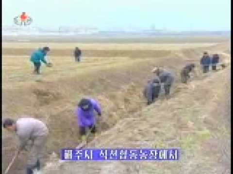 Report on progress made in the agricultural sector in South Hamgyong Province. Broadcast on Korean Central Television news on March 5, 2009.