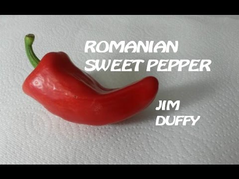 Romanian Sweet Pepper (Refining Fire Chiles)   Afterburn Pod Review