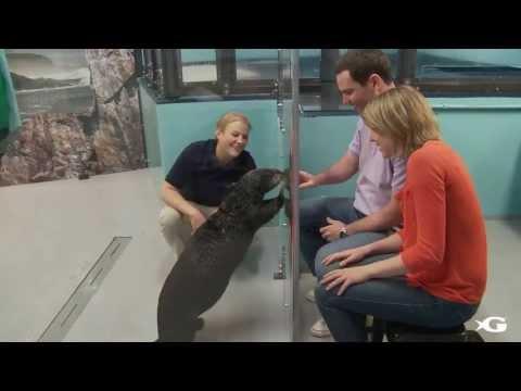 Meet a Sea Otter at Georgia Aquarium