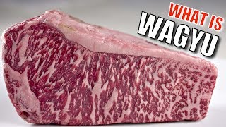 What is Wagyu?