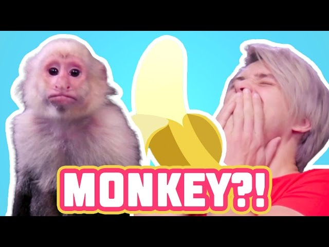 HOW TO TRAIN A MONKEY! Cell Outs