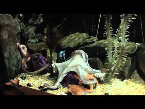 Trip to Atlanta - Georgia Aquarium