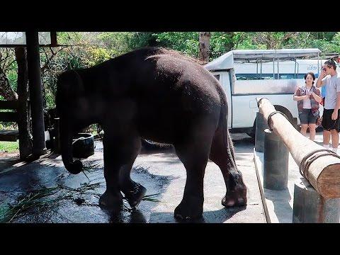 Angekettete Elefanten auf Phuket - Asiatrip | solonomade