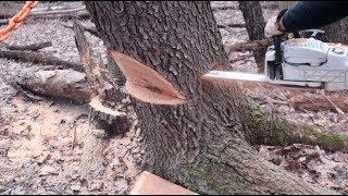 #353 DANGEROUS TREES! Severe Lean, Good info to share