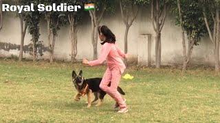 K9 German Shepherd CoCo of Royal Soldier. Informative  Video. Our Buffalos their Milk capacity price