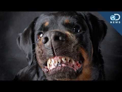 Are Some Dog Breeds More Aggressive? klip izle