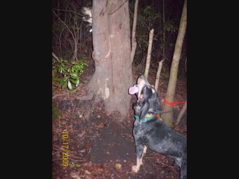 coon hunting videos Video