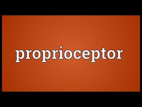 Header of proprioceptor