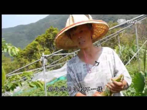 蔬果生活誌-20140125 黑珍珠玉米健康有嚼勁