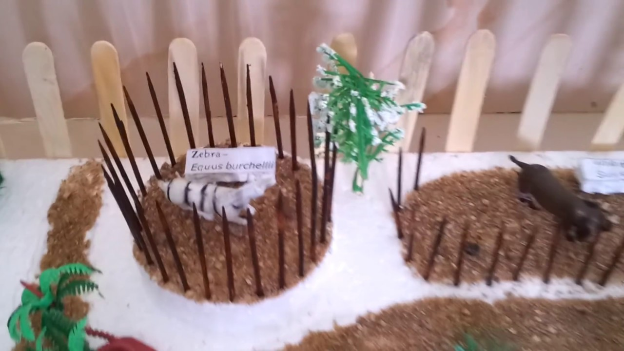 Zoo Model For School Project Model of Zoo For School