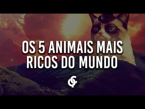 Os 5 animais mais ricos do mundo #01