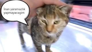 İstanbul Ücretsiz Yavru Kedi sahiplendirme