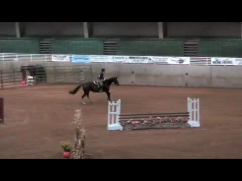Horse show jumping and horse fall offs.
