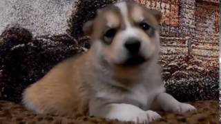 Funny Dogs Compilation Videos | Cute Puppy Videos Free