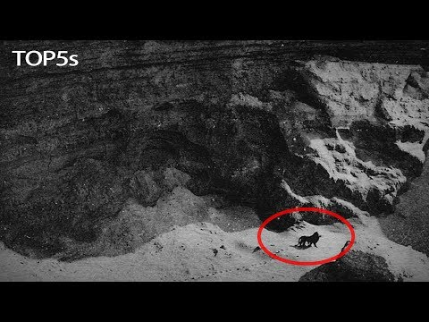 5 Last Ever Photos & Video Footage of Now Extinct Animals