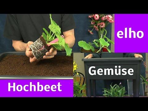 Hochbeet befüllen und bepflanzen mit Gemüse