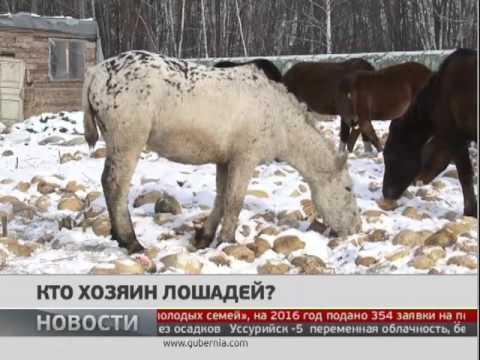 Кто хозяин лошадей. Новости. GuberniaTV
