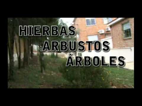 Las plantas hierbas arbustos y rboles youtube - Arbustos con flores ...