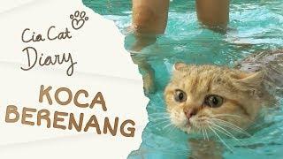 Cia Cat Diary - Ep 31 - Koca Berenang
