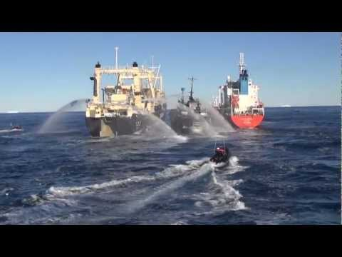 Nisshin Maru Boxes Bob Barker Between Itself and Fuel Tanker, Causes Multiple Collisions