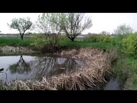 рыбалка на реке койсуг