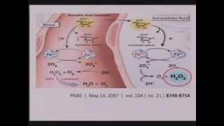 Vitamin C Intravenous - The Riordan Protocal