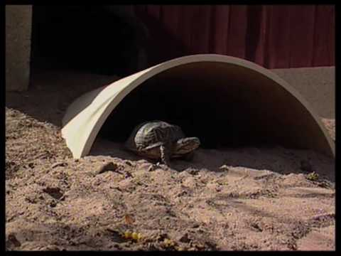 Learn How A Roswell New Mexico Gardener Created A Turtle