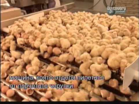 How it's made - Mass production chicken fabric chicken factory