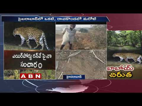 Cheetahs Roaming in Hyderabad and Surronding Areas | ABN Telugu
