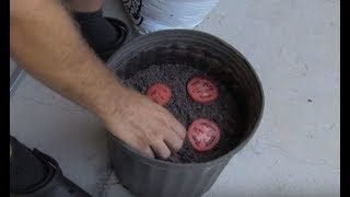 Man Who Left Tomato Slices In A Bucket For 10 Days Has The Whole Neighborhood Jealous