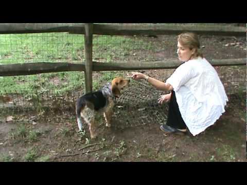 Realtor Lisa Patton Shows You How To Dog Proof Your Fence