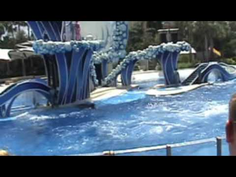blue-horizon-3-crazy-high-dolphin-jumps-and-flips.html