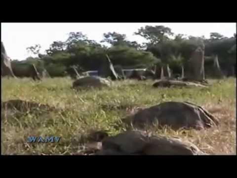Monolitos y Petroglifos de Quillusara - Ecuador