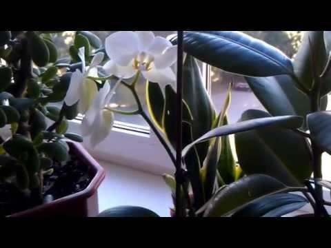 Мои любимые комнатные цветы