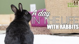 A Day In The Life - With Rabbits