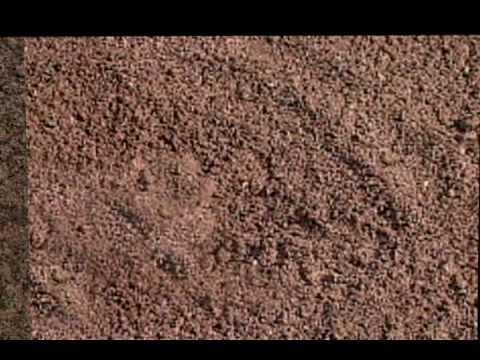 Tipos de suelos - BlogEcologista