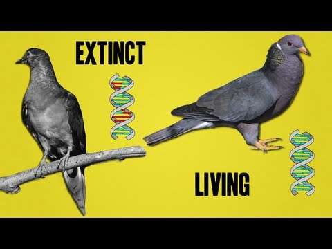 The Science Behind De-extinction